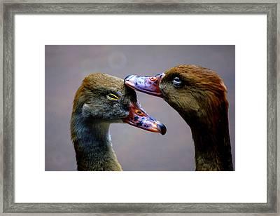 I Crown You Ducklet Framed Print by DerekTXFactor Creative