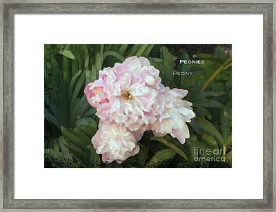 I Cry For You My Peonies Framed Print