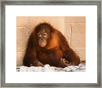 I Didn't Mean To Do It Framed Print by Robert L Jackson
