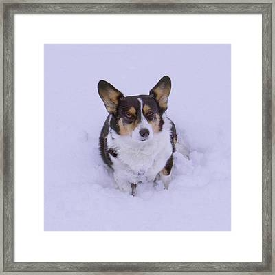 I Do Not Like Snow Framed Print by Mike McGlothlen