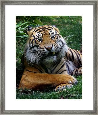 I Don't Always Framed Print