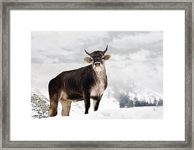 I Don't Like Snow Framed Print