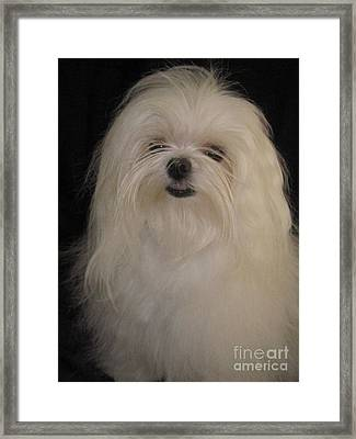 I Dont Like Topknots Framed Print by Margaret Newcomb