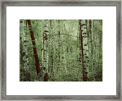 Dreams Of A Forest Framed Print