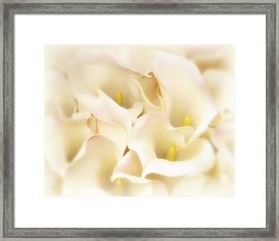 I Dreamed Of Calla Lilies Framed Print