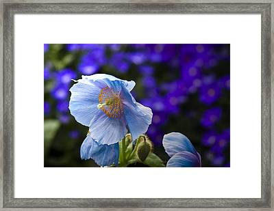 I Feel Blue Framed Print by Samantha Eisenhauer