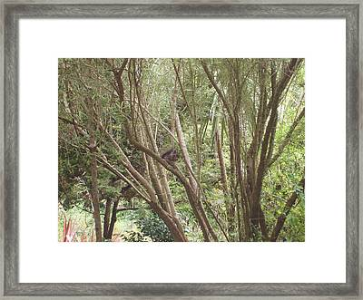 I Found You Framed Print by Hiroko Sakai