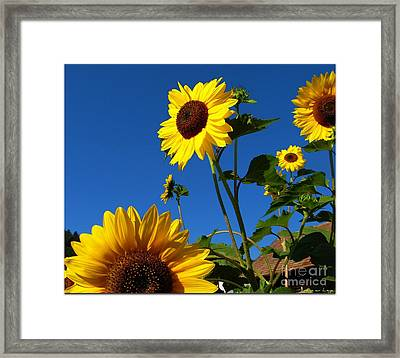 I Girasoli Dietro Casa Mia - Sunflowers In The Field Behind My House. Framed Print by Mariana Costa Weldon