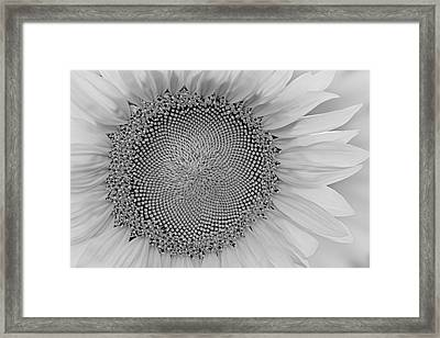 I Got Sunshine Bw Framed Print