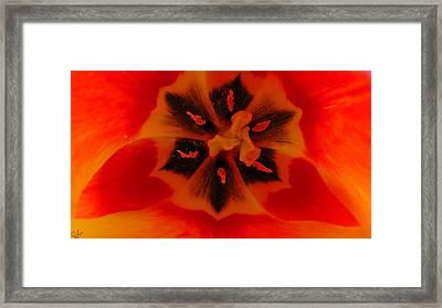 I Have A Dream... Into A Tulip. Framed Print by Sascha Kolek