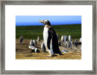 I Have A Dream - Penguin Framed Print by DerekTXFactor Creative