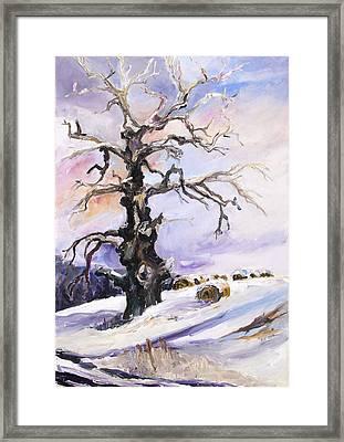 I Have Got Stories To Tell Old Oak Tree In Mecklenburg Germany Framed Print by Barbara Pommerenke