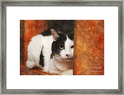 I Have My Eye On You Framed Print by Andee Design