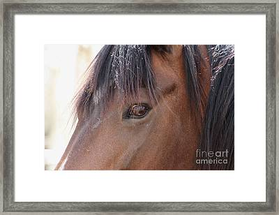 I Have My Eye On You Framed Print by Fiona Kennard
