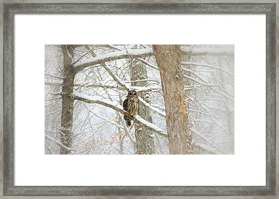 I Have My Eyes On You Framed Print by Sharon Batdorf