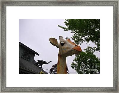 I Have No Idea What That Elephant Is Thinking Framed Print by John Malone