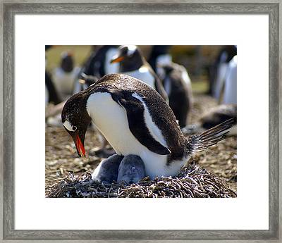I Have Two - Penguins Framed Print by DerekTXFactor Creative