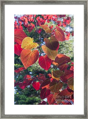 I Heart You Framed Print by Chris Scroggins
