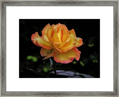 Framed Print featuring the photograph I Know I'm Beautiful by Hanny Heim
