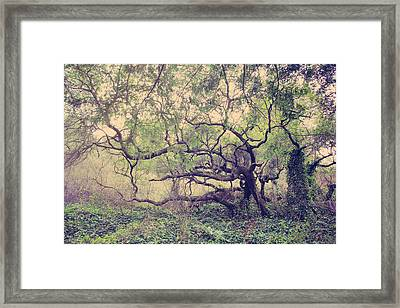 I Know You're Lonely Framed Print by Laurie Search
