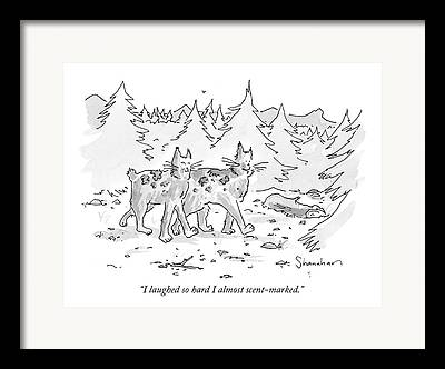 Bobcats Drawings Framed Prints