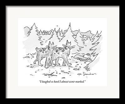 Bobcat Drawings Framed Prints