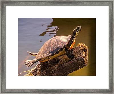 I Like Sunny Day Framed Print by Zina Stromberg