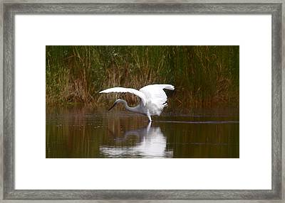 I Look Pretty Framed Print by Leticia Latocki