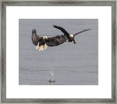 I Lost My Fish  Framed Print by Glenn Lawrence