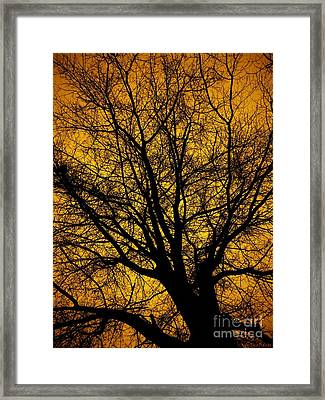 I Love Bare Trees Framed Print by Christy Ricafrente
