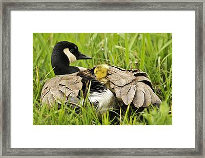 I Love My Mom Framed Print by Kenneth Haley