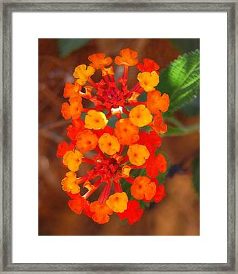 Framed Print featuring the photograph I Love Orange by Lew Davis