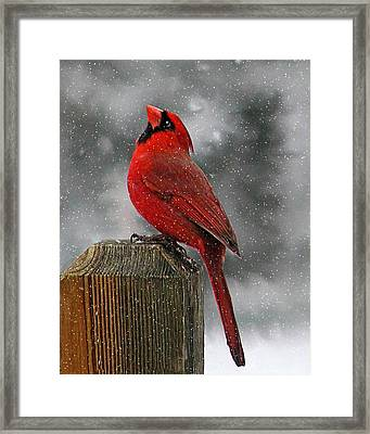 I Love Snow..... Framed Print