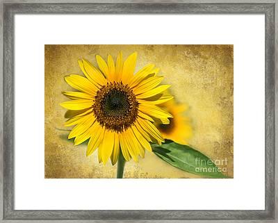 I Love Sunflowers Framed Print