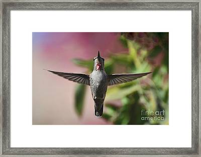 I Love You Framed Print by Debby Pueschel