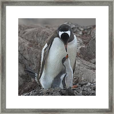 I Love You... Framed Print by Nina Stavlund