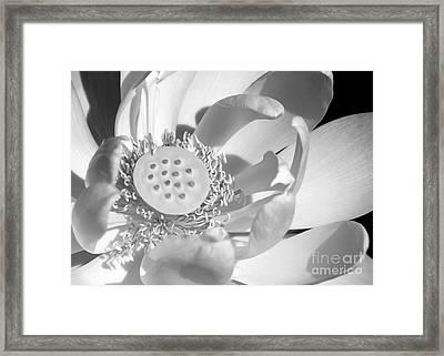 I Love You Framed Print by Sabrina L Ryan