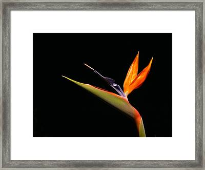 Framed Print featuring the photograph I Love You Too by Evelyn Tambour