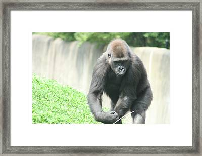 I Mean Business Framed Print by Starla Perdew