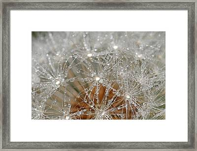 I Might've Gone To Seed But I Still Know How To Party Framed Print by Peggy Collins