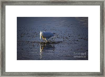 I Missed Framed Print by Marvin Spates