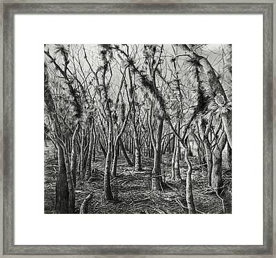 If Not For These Trees I Could See The Forest Framed Print