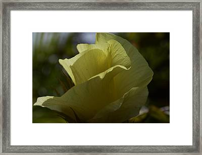 I Now Know Framed Print by Tara Miller