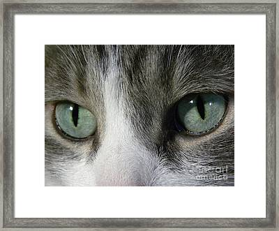 I Only Have Eyes For You Framed Print by Laura Yamada