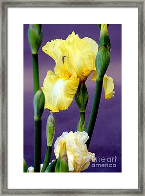 I Only Have Iris For You Framed Print by Kathy  White