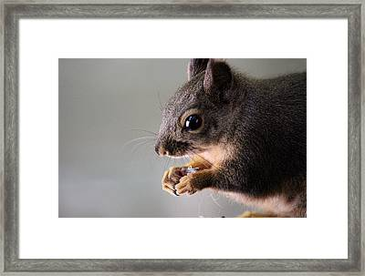 I Open The Seed Like This Framed Print by Kym Backland