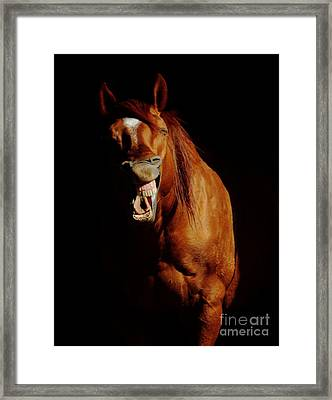 Horse Whisperer Framed Print by Robert Frederick