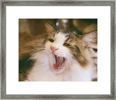 I Said No Framed Print by Rosalie Klidies