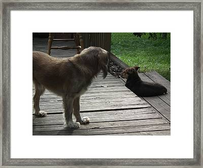 I Say Son Framed Print by Robert Rhoads