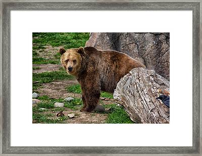 I See A Grizzly Bear Framed Print